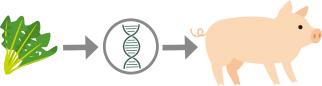 遺伝子組み換えのイメージ
